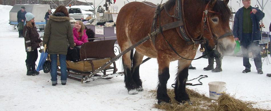 Finnmarknad-vinterhäst-hemsida