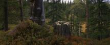 Skalens-Stubbe-och-knotträd-hemsida